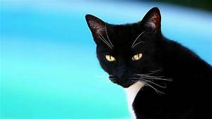 Black, Cat, 1920x1080, Wallpaper, High, Quality, Wallpapers, High, Definition, Wallpapers