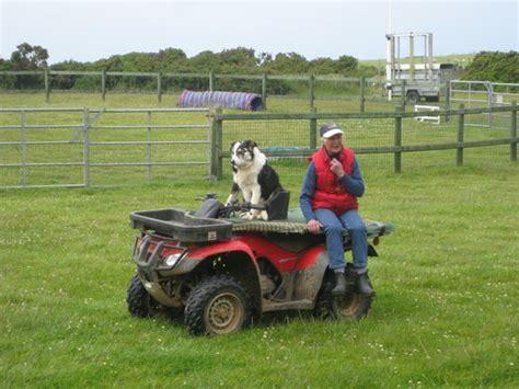 dog quad driving