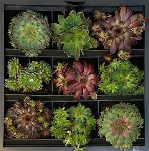 1000 images about karoo vertikaler garten green wall on With katzennetz balkon mit plug and plant vertical garden