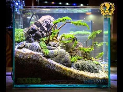 nano aquascapes aquascape contest 2016 nano tank