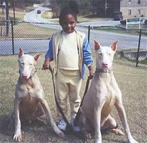 Huurhun Dog :D: Doberman Pinscher
