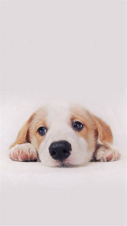 Puppy Wallpapers Iphone Dog Pet Plus Wallpapertag