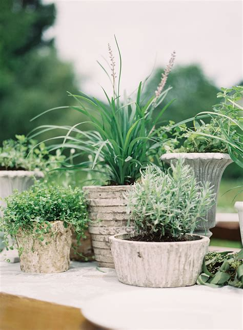 organic potted plant centerpieces wedding plant