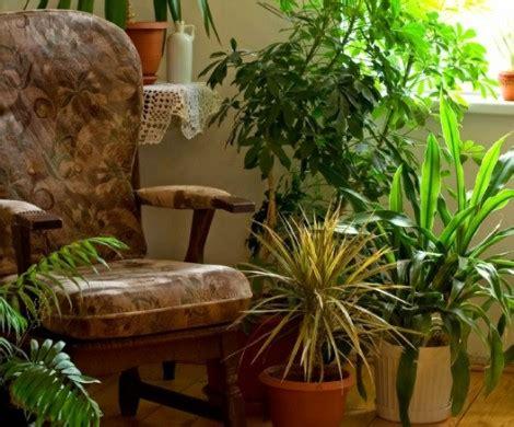 wie ueberwintern ihre balkonpflanzen