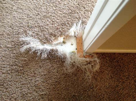 Pet Carpet Damage Repair San Diego  San Diego Carpet