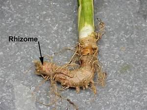Hort 202: Plant Structures