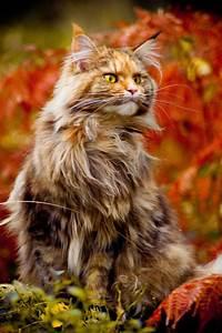 kitten (o) on Pinterest | Black Cats, Cats and Kitty
