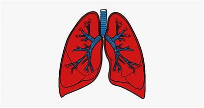 Lungs Background Transparent Clipart Clipartkey