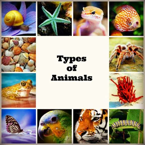 Types of Animals and Their Characteristics Biology Explorer