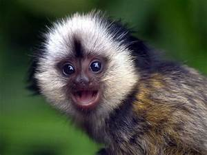 really-cute-baby-monkeys.jpg (500×375) | MONKEYS AND APES ...