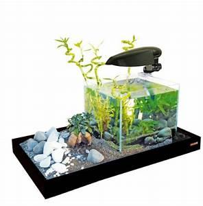 Welche Fische Passen Zusammen Aquarium : welches aquarium f r einsteiger tipps aus der praxis teil 1 ~ Lizthompson.info Haus und Dekorationen