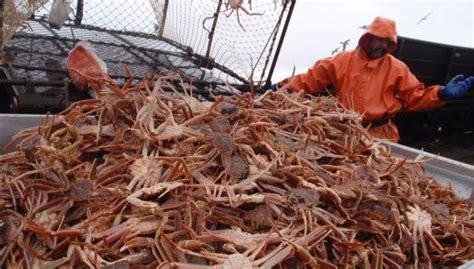 Crab Fishing Boat Jobs alaska fishing jobs current job vacancies excellent