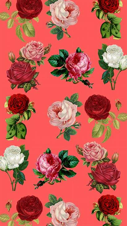 Iphone Flower Wallpapers Floral Plus Roses Pretty