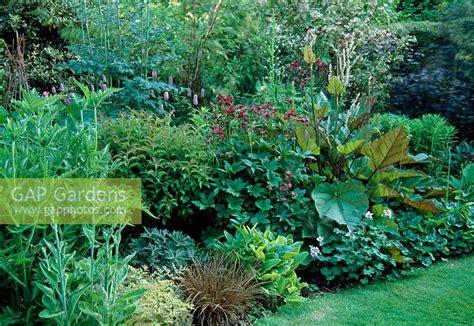 woodland border plants gap gardens shady woodland border of mixed shrubs and perennials image no 0223926 photo