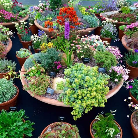 your pots 25 inspiring practical ideas for container gardens the middle sized garden