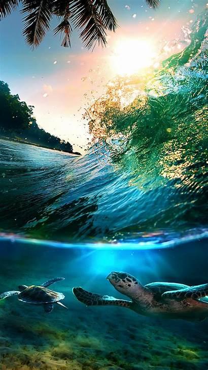 Tropical Beach Iphone Sea Island Plus Turtles