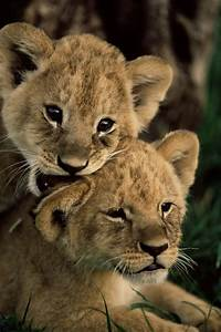 1989 best images about Wild animals on Pinterest | Tiger ...