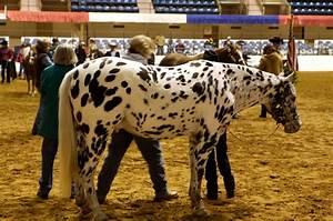 DMVA Champs Quiz #2 - Pony Breeds - ProProfs Quiz