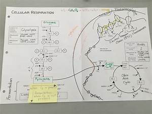 Cellular Respiration Diagram