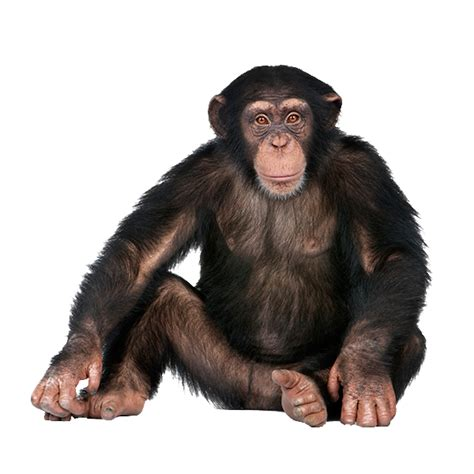 monkey  expert web designer
