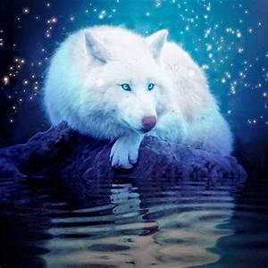 Bébé Loup Blanc : loup blanc nuit etoiles image gif anim ~ Farleysfitness.com Idées de Décoration