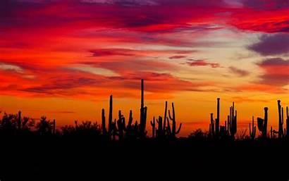 Sunset Arizona Cacti Silhouettes Desert Wallpapers Widescreen
