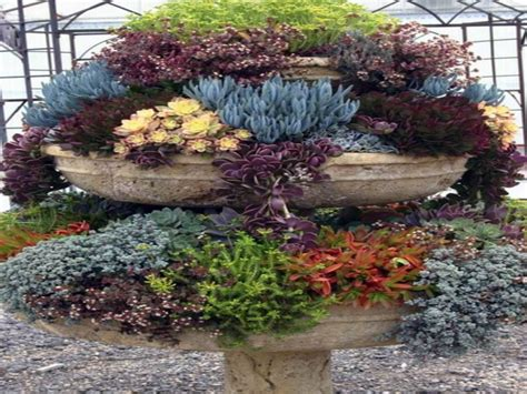succulents garden ideas pots for succulent gardens