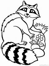 Raccoon Coloring Pages Cute Drawing Face Animal Racoon Marine Animals Template Printable Colors Enot Getdrawings Clipartmag Mycoloring Recommended sketch template