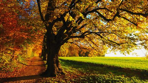 1080p Fall Desktop Backgrounds Hd by Hd 1080p Fall Wallpaper 79 Images