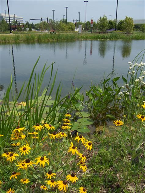 Greenacres Landscaping With Native Plants  Great Lakes