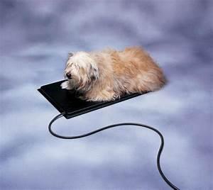Plastic heated pet mat at menardsr for Menards dog house