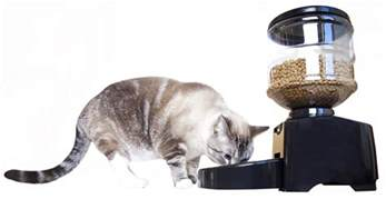 feeder for cats pet supplies mota dinner pet feeder automatic