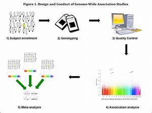 Copd Genetics