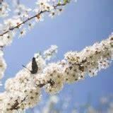 16 April Sternzeichen : l we eigenschaften st rken und schw chen im berblick ~ Bigdaddyawards.com Haus und Dekorationen