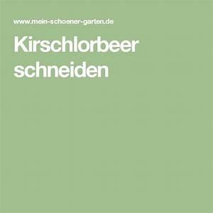 Kirschlorbeer Selber Ziehen : die besten 17 ideen zu kirschlorbeer auf pinterest ~ Orissabook.com Haus und Dekorationen