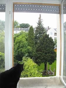 Katzen In Mietwohnung 2016 : balkon und fenstersicherungen katzenschutz bonn rhein ~ Lizthompson.info Haus und Dekorationen