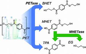 Petase Catalyzes The Depolymerization Of Pet To Bis 2