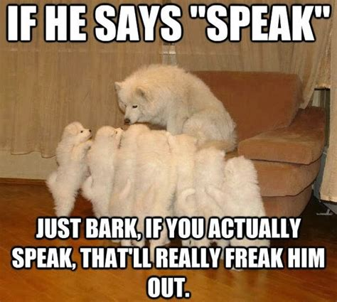 Animal Memes Clean - 30 funny animal captions part 17 30 pics amazing creatures