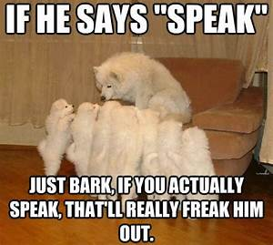 30 Funny animal captions - part 17 (30 pics) | Amazing ...