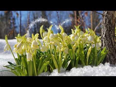 Pavasara sūtnes - sniegpulkstenītes! - YouTube