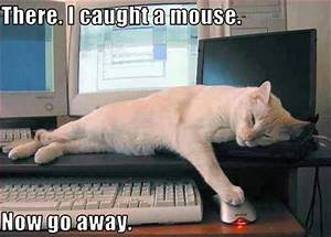 funny pictures cat catches mouse - Dump A Day