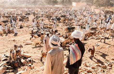 Photo of the Week: Getting your goat in Eritrea - African ...