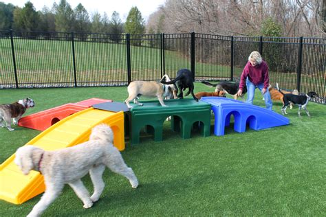 dog daycare duffys bed  biscuit llc