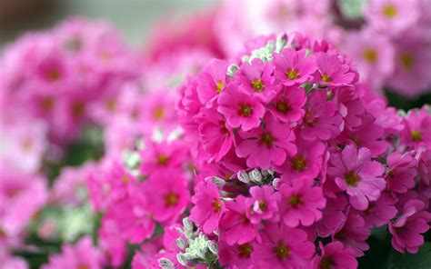small pics of flowers small pink flowers wallpaper 702224