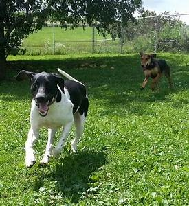 dogs to adopt adoptapetpetfinderpetango