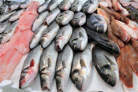 maximum    fish   eat