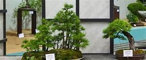 Bonsai Garten Hamburg : deutsche bundesgartenschau gesellschaft volker einbock ~ Lizthompson.info Haus und Dekorationen