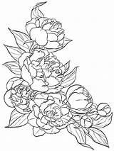 Coloring Peony Flower Printable Getcolorings Colorings sketch template