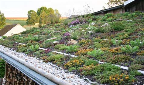 Dachbegruenung Oase Im Asphalt Dschungel by Gr 252 Ndach Aufbau Fkh
