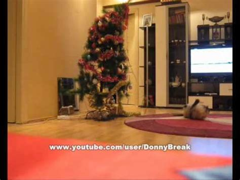 funny pictures of cats and christmas trees cat knocks tree